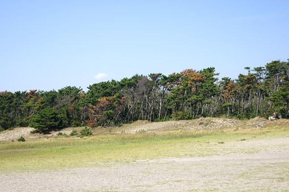 砂丘から見た飛砂防備保安林