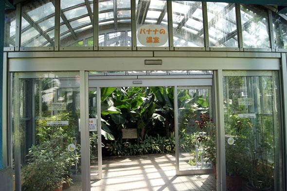 バナナの温室