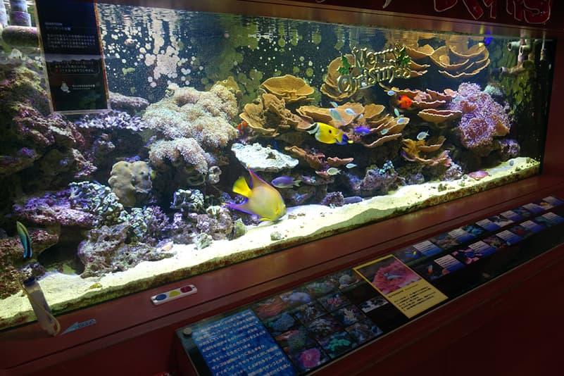 ヨコハマおもしろ水族館の水槽