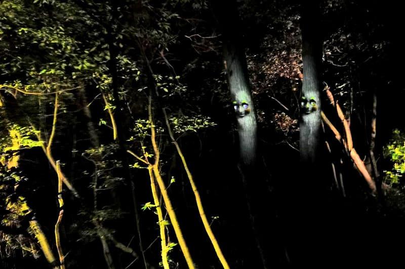 人の顔をした木