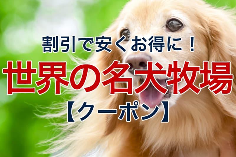 割引で安くお得に 世界の名犬牧場 クーポン