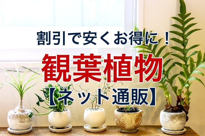 割引で安くお得に 観葉植物 ネット通販