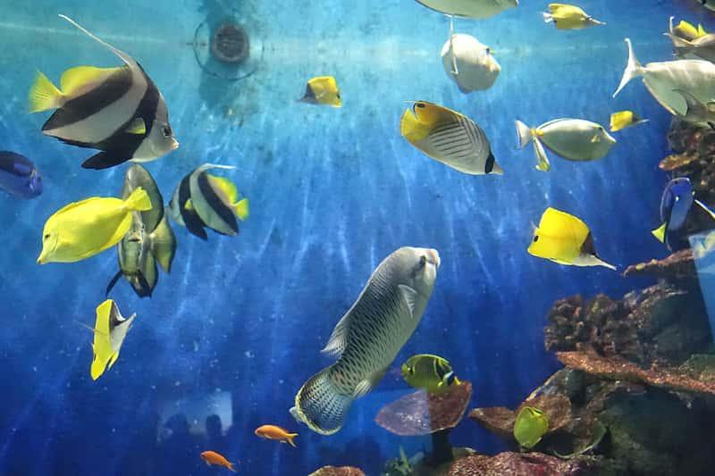 城崎マリンワールドの魚