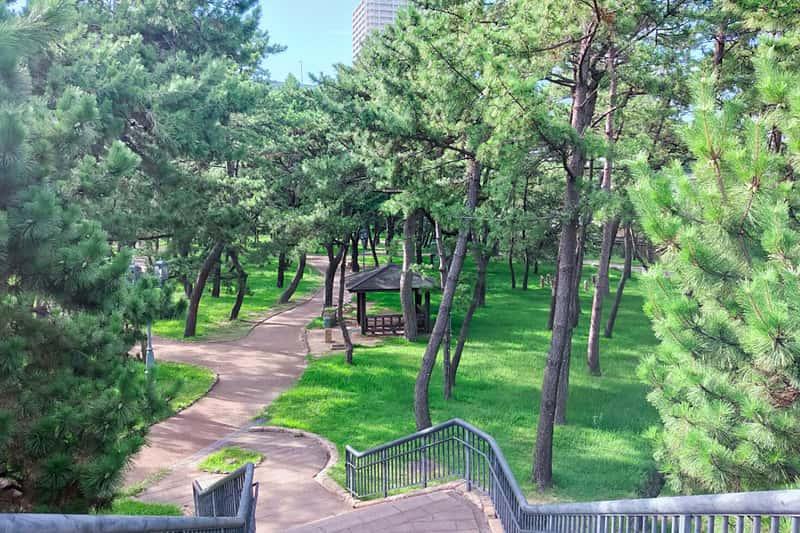 舞子公園松林