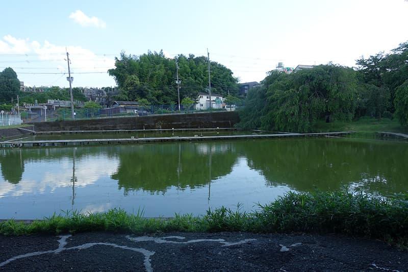 さくら公園鯉釣り池