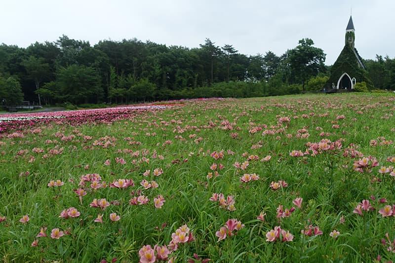 牧歌の里のお花畑